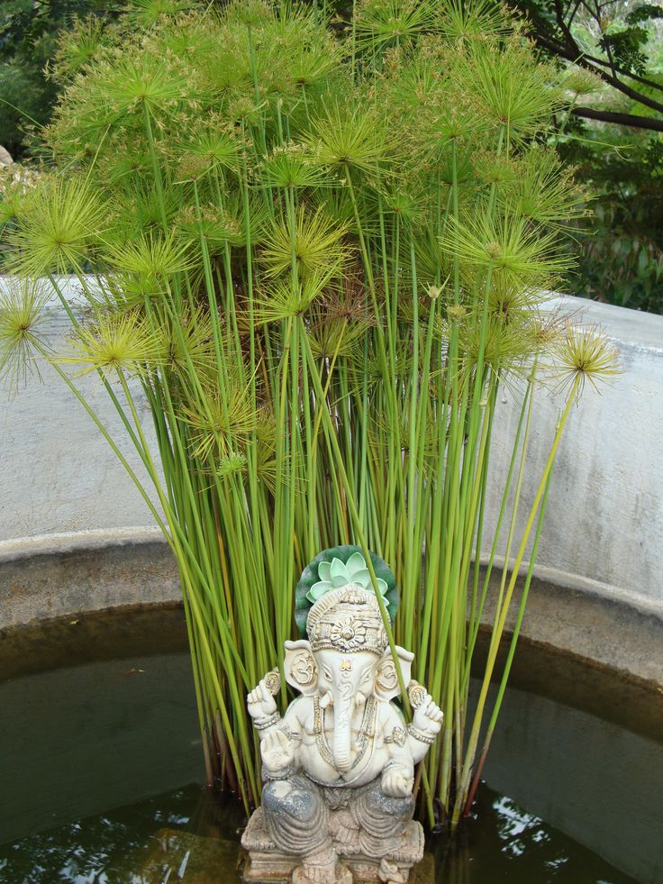 Asian garden grass she!!!!!! like