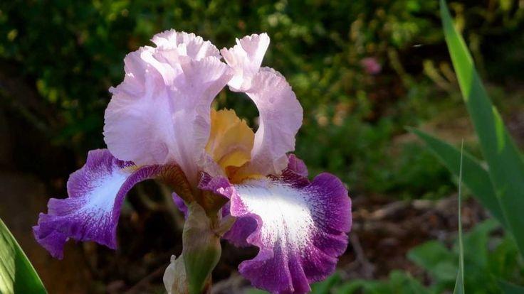 ERNESTO CORTAZAR - HISTORIA DE UN AMOR - MI AMOR POR TI - BEAUTIFUL FLOWERS