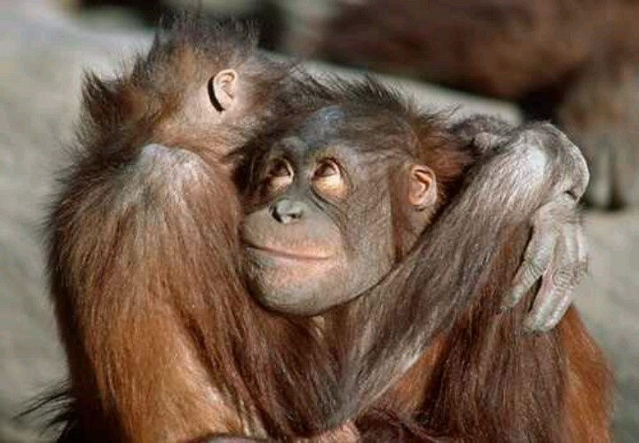 Monkey Hugs Cute Animals Pinterest Monkey