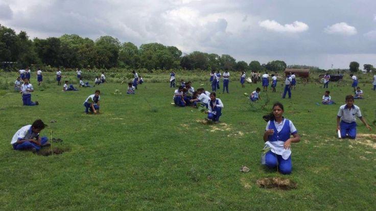 In India, piantati oltre 50 milioni di alberi in un solo giorno. L'obiettivo è quello di piantare alberi contro la deforestazione dell'India e combattere l'inquinamento.