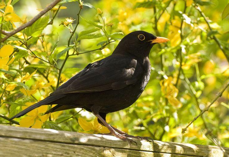 410 best Animals Bird Vogel images on Pinterest Beautiful birds Little birds and Butterflies