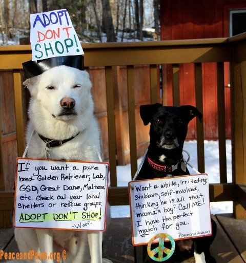 Adopt!!!
