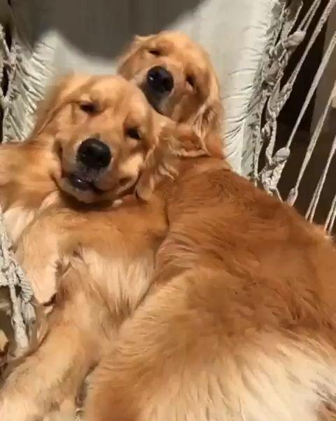 Vida boa é assim! #dogs #funny #humor #cães