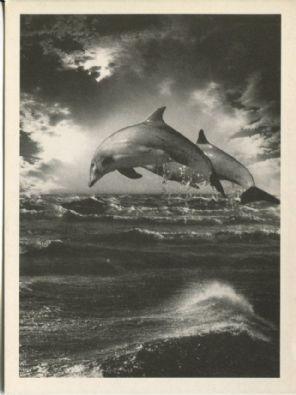 Athena Postcard, Atlantic Dolphins