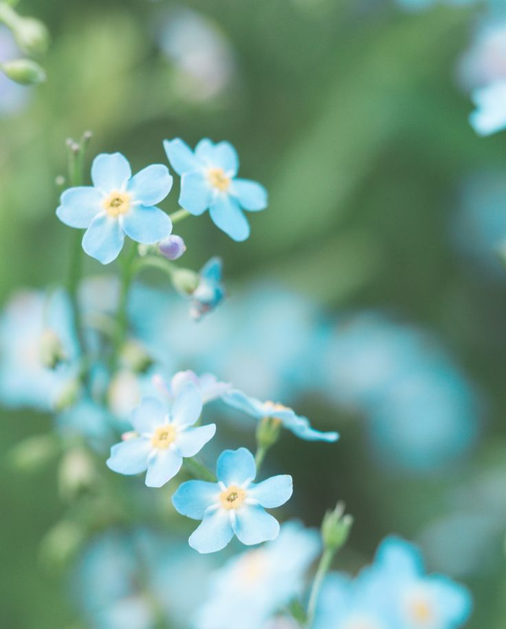 Beautiful Blue Flowers 🌺