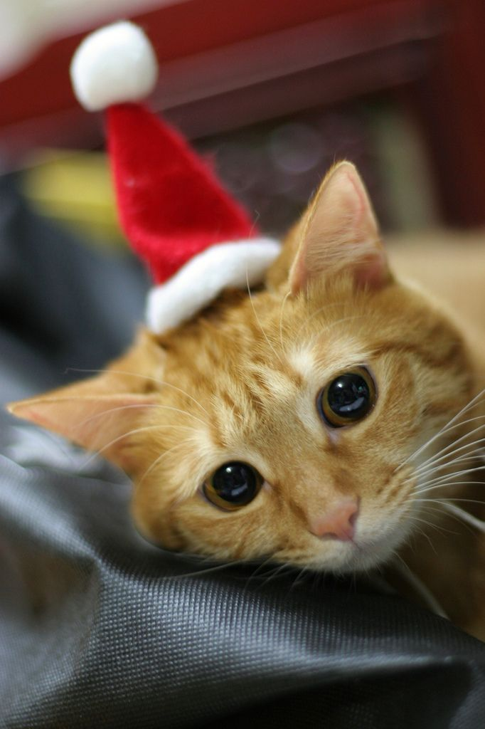 Why cat cannot go to christmas party? >_
