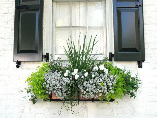 Accords de couleurs blanc et vert pour cette jardinière -  Spencer Means / flickr.com