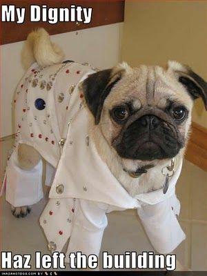 Elvis Pug :)