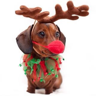 Rudolf the Red-Nosed Dachshund. | Community Post: 20 Adorable Dachshunds Who Are Totally Ready For Christmas