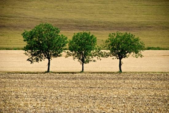 Three Trees, Charroux, France