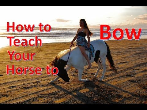 How to Teach Your Horse to Bow [NO ROPES] - YouTube In my personal preference i like her better from the ones i have watched