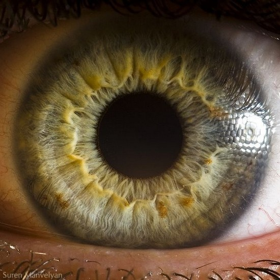 eyes #photograpy #eyes: Suren Manvelyan, Surenmanvelyan, Human Eye, Macros Photography, Eye Photograpi, Close Up, Green Eye, Beautiful Eye, Closeup