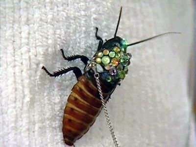 "This is actually a LIVE cockroach. People ""bejewel"" them and keep them on leashes as pets."
