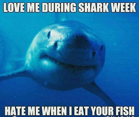 shark,love me during shark week,hate me when i eat your ...