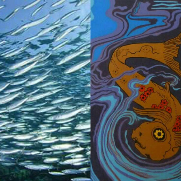 One Fish, many fishes #fishing #pesci #fishes #pesca #pescatori #fishermen