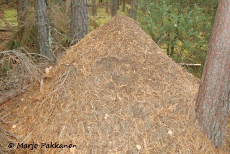 Aistimuksia ja elämyksiä, Orvokki-oravan luontokoulu