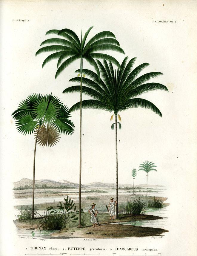 Alcide d'Orbigny, Voyage dans l'Amérique méridionale, 1839 /  ©Musée du Vivant - AgroParisTech