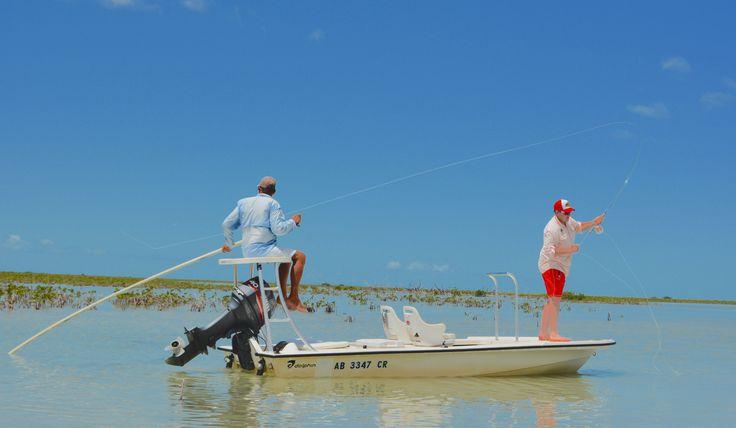 Chasing tailing bonefish
