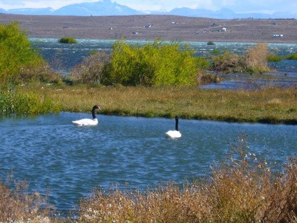 reserva Laguna nimez, Calafate