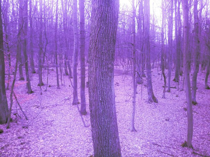 purple forest aesthetic