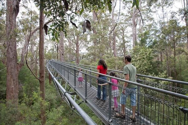 Denmark Visitor Centre : Experience Denmark : tree top walk. Valley of the giants