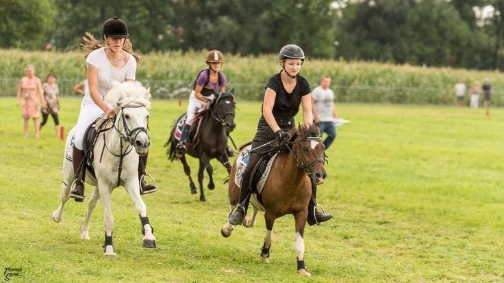 Pferderennen beim Herbstfest Erding 2017