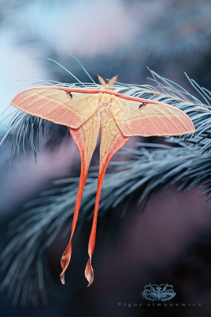 Absolutely beautiful insect (and other) photography. blepharopsis.deviantart.com