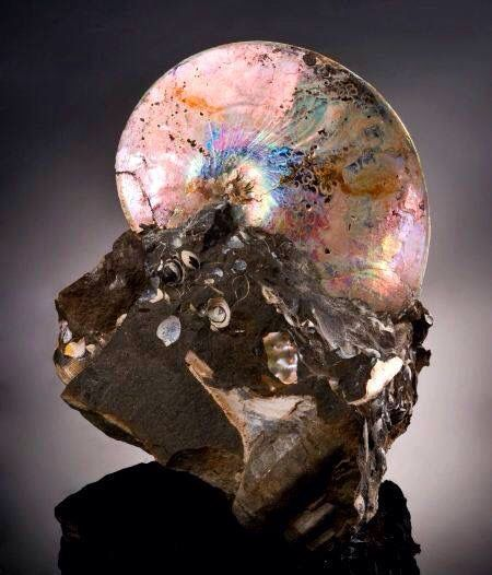 Mother of pearl ammonite