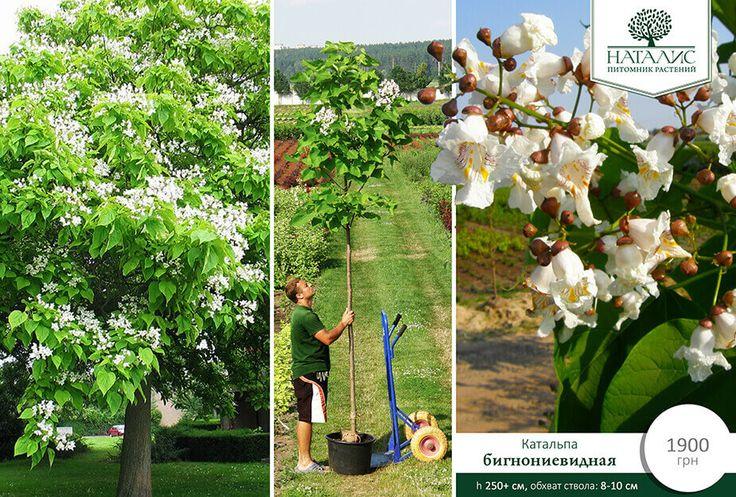 Natalis - питомник растений | Садовый центр