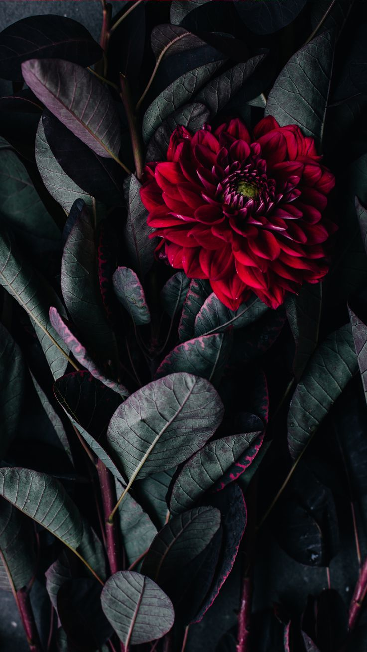 Red Flower ★ Download more floral iPhone Wallpapers at @prettywallpaper
