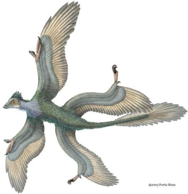 These Dinosaurs Could Fit in a Prehistoric Breadbox: Smallest Raptor - Microraptor