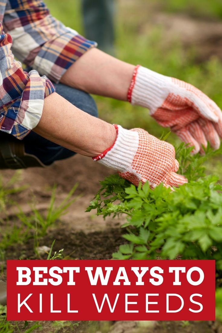 Kill weeds in flower beds - Best Way To Kill Weeds In Flowerbeds Grass Gardens And More