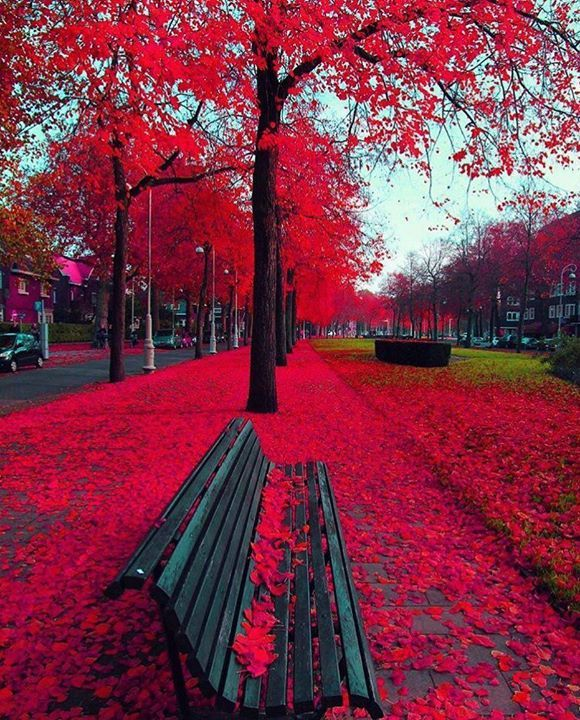 Hotels-live.com/pages/sejours-pas-chers - Love the colors of the leaves in this shot from Amsterdam Netherlands! Go check out @world_of_instapix for more shots like this around the world! Photo by @kardinalmelon  If you want to be featured here DM or tag me in your photo.  #mytravelgoals #mtg #mytravelgram #mytripmyadventure #travel #travels #travelbug #travelgoals #trek #instaglobal #wanderlust #amsterdam #amsterdamcity #netherlands #leaves #bench Hotels-live.com via…