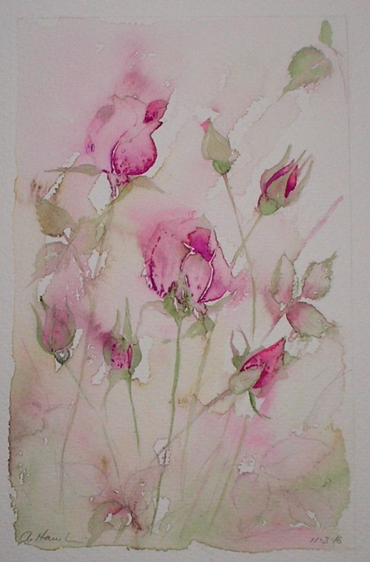 SOLD!  'PINK ROSE BUDS' watercolour painting by Amanda Hawkins