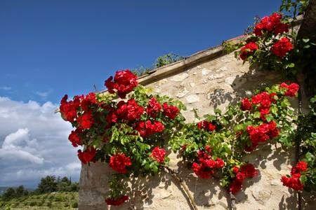 Come e Quando Potare le Rose