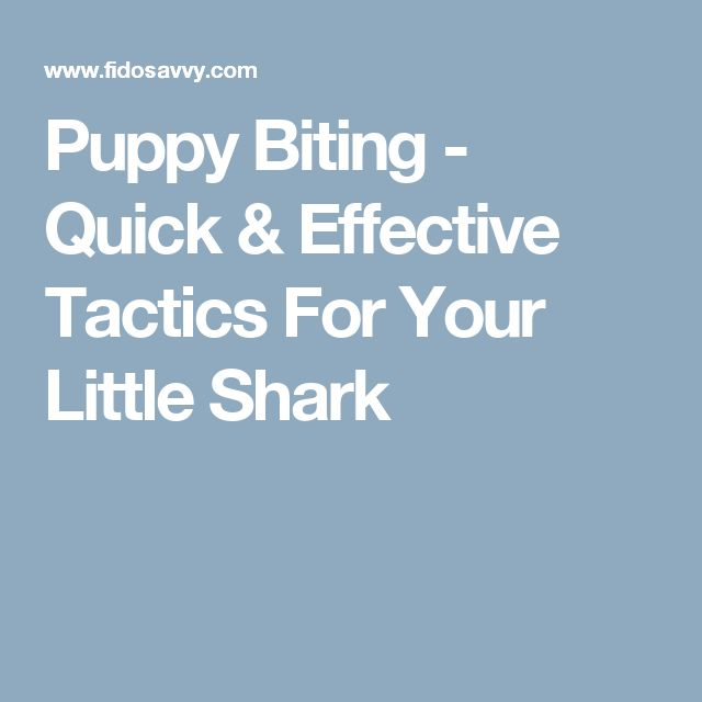 Puppy Biting - Quick & Effective Tactics For Your Little Shark
