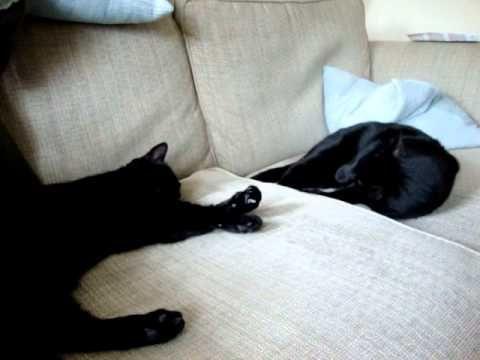Tess preening Tilly - cat preening cat