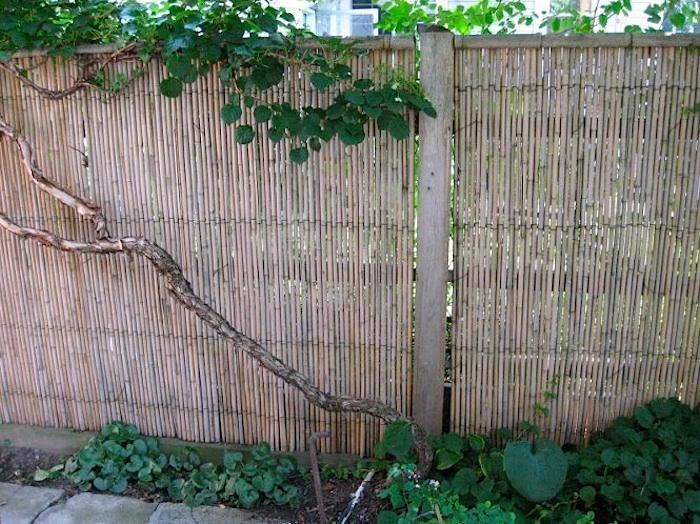91 Best Natural Privacy And Diy Fences Images On Pinterest