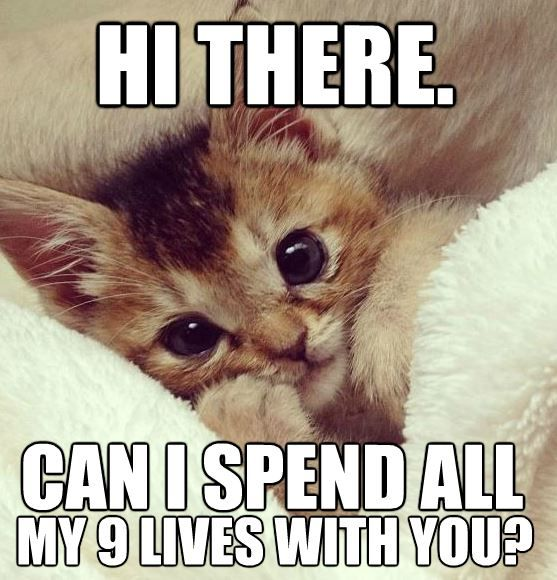 Cutest funny kitty on the internet! REPIN if you agree :)