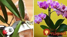 Ako rozmnožiť orchideu? Toto je najjednoduchší spôsob!