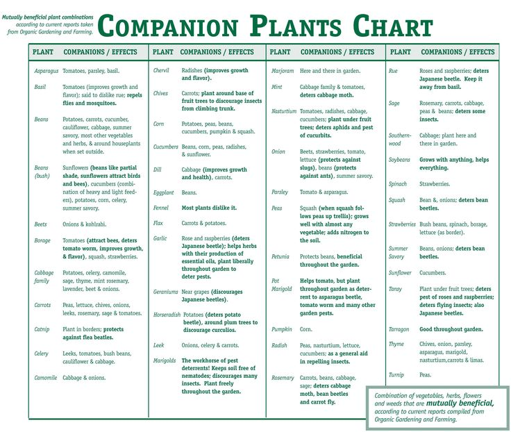 Companion Plants Chart.  This list shows you what to plant with what, so that your garden can flourish!  Very helpful.
