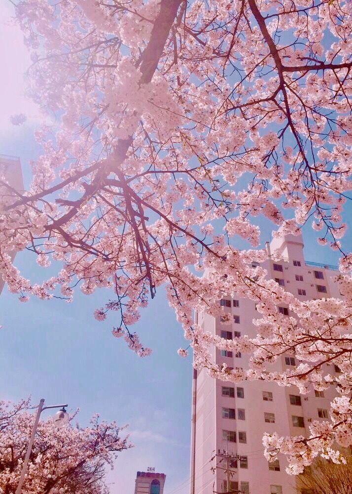 For wall collage blue,blue wallpaper,aesthetic blue,pastel blue aesthetic. VSCO - #cherryblossom #beautiful #photography | selbeaux
