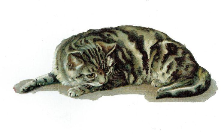 Un chromo - Découpis - Gros chat  - 22 cm fr.picclick.com