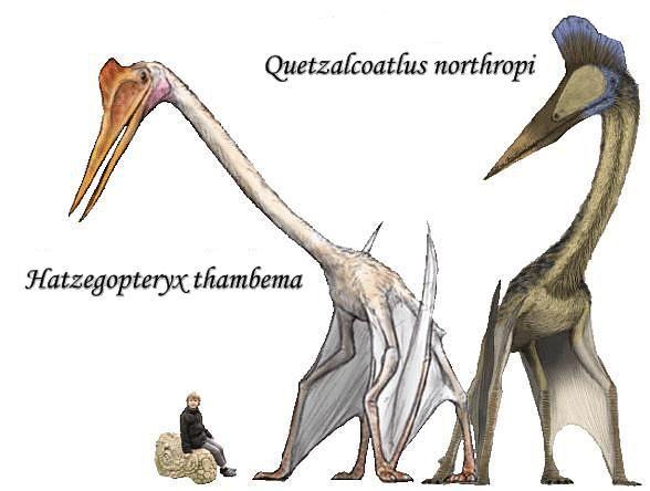 Quetzalcoatlus et Hatzegopteryx. | Préhistoire : Dinosaures & Cie | Pinterest | Search and Image ...