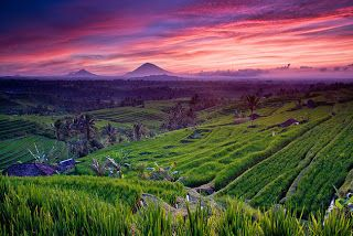 Tourist Destinations in Indonesia: Jatiluwih Rice Terraces in the heart of the Tabanan Regency in Bali. It's a UNESCO World Heritage-listed site.