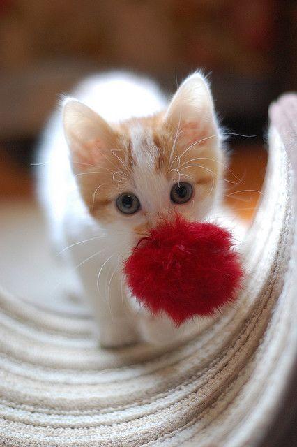 Aww, kitten's got a little toy.