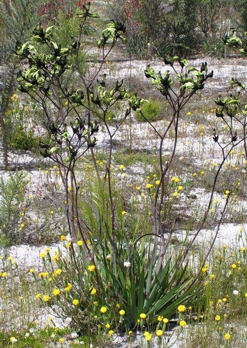Landscaping suggestion: Habitat