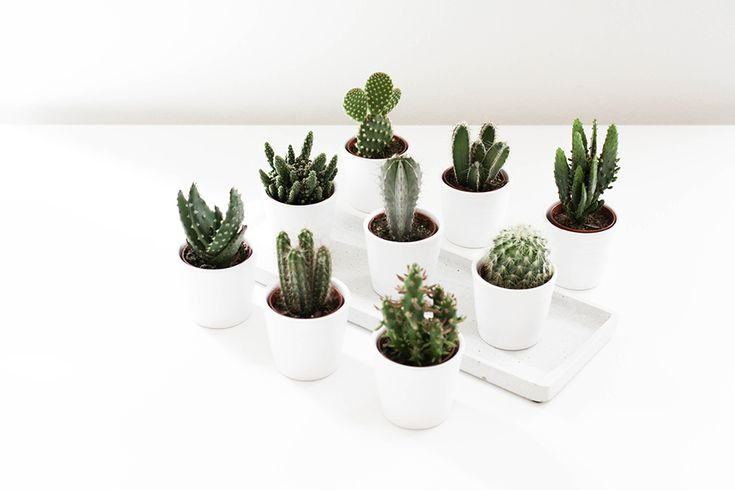 noa-noir-art-interior-home-decor-cactus-cacti-succulents-green-mini-plants-minimalistic