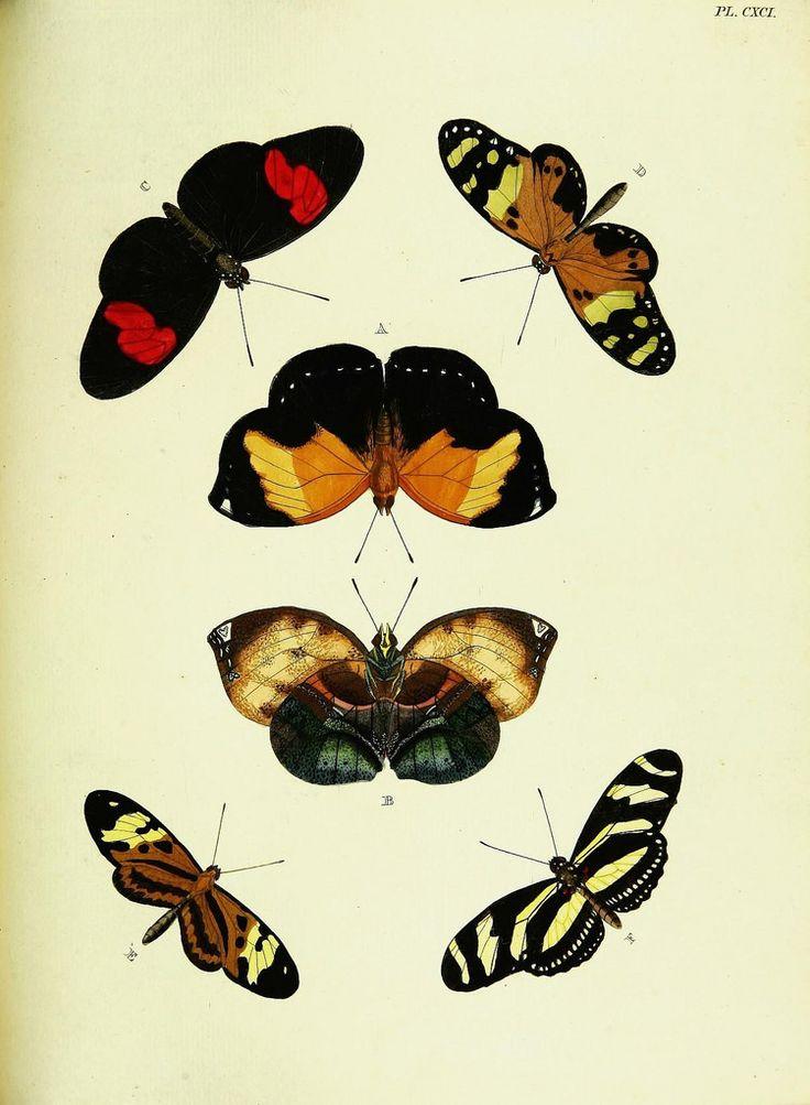De uitlandsche kapellen voorkomende in de drie waereld-deelen, Asia, Africa en America,. Amsteldam,Chez S. J. Baalde;1779-1782.. biodiversitylibrary.org/page/42111669