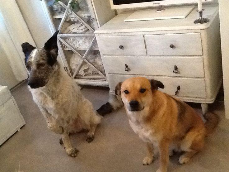 Rakkaat koirani, Hulda jaRaisa